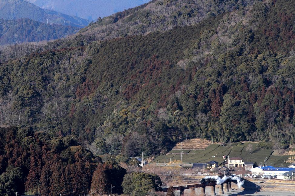 風に吹き千切られる白煙 - 2013年冬・大井川 -  _b0190710_21265575.jpg