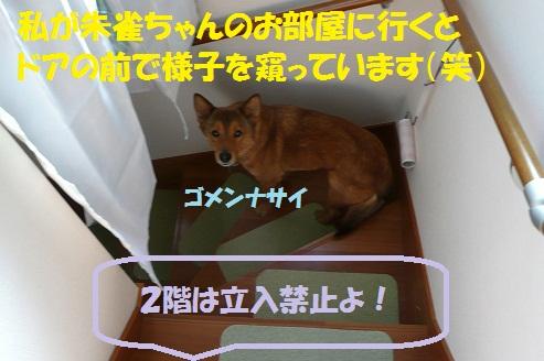 f0121712_6331161.jpg
