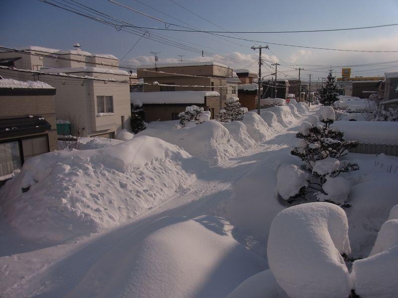 積雪記録更新下に見つけた「小さな春」_c0025115_2291994.jpg