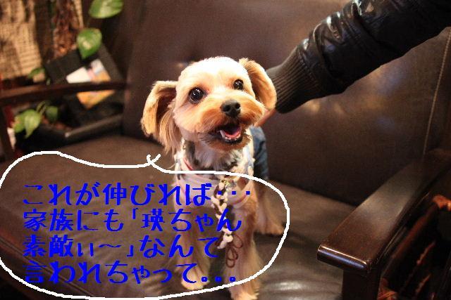 b0130018_1015915.jpg