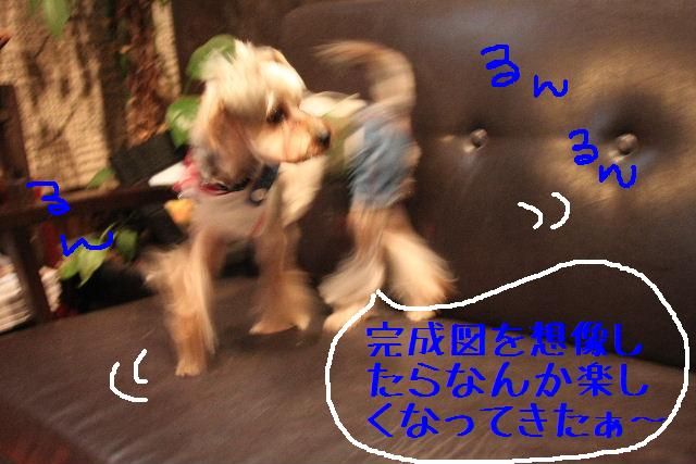 b0130018_102971.jpg