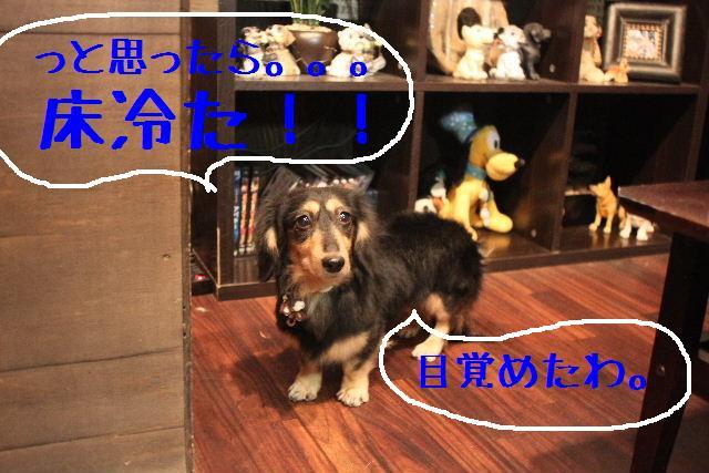 b0130018_1034080.jpg