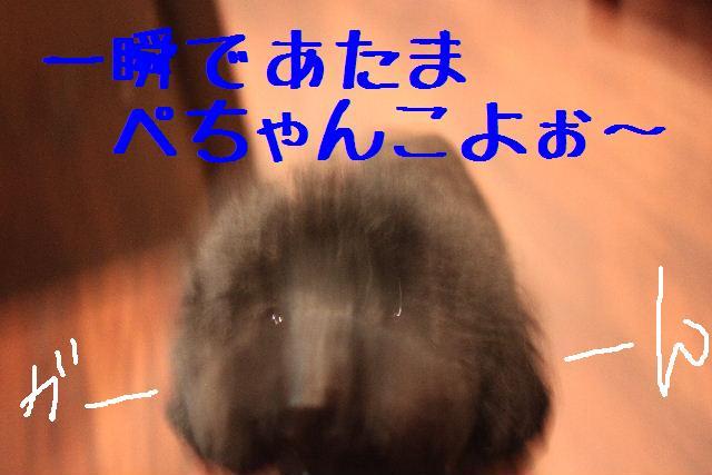 b0130018_105774.jpg