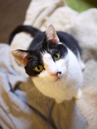 猫のお友だち 正宗くん編。_a0143140_02273.jpg