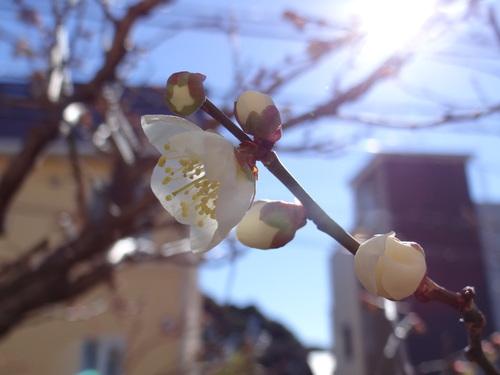 少しずつ春♪_e0240147_22261868.jpg