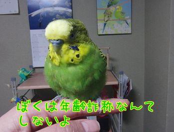 f0196665_8452029.jpg