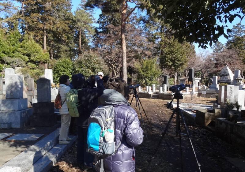 多磨霊園で冬の野鳥観察会_f0059673_20543676.jpg