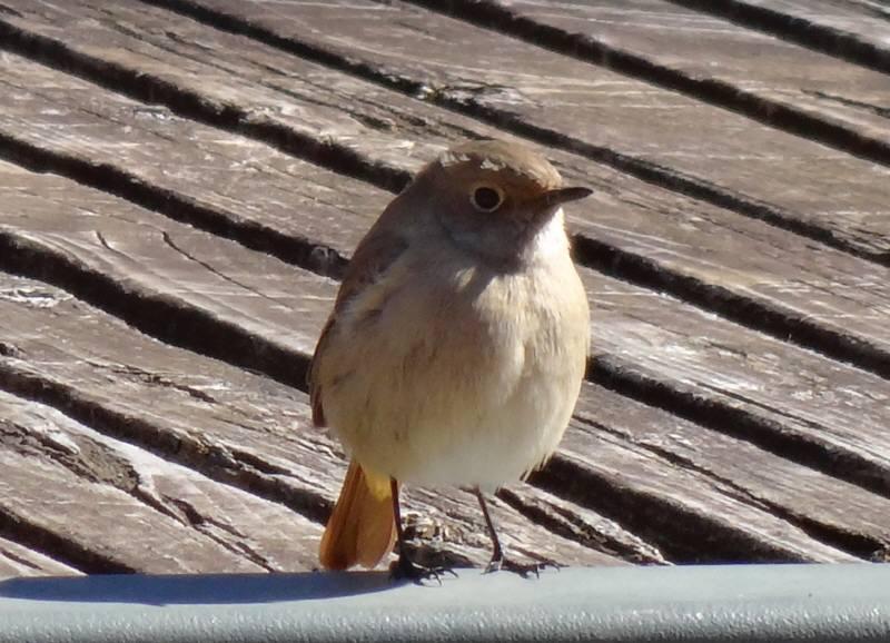 多磨霊園で冬の野鳥観察会_f0059673_2055448.jpg