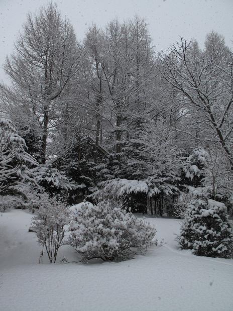 外は雪_a0156039_2144936.jpg