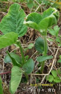 野菜の芽_f0258061_5322633.jpg