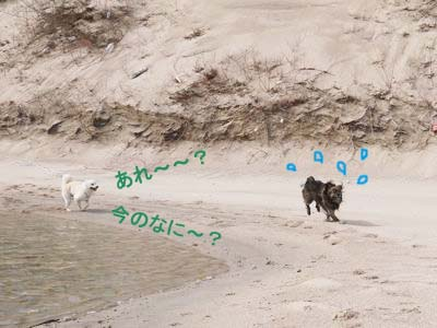 カナイくんを探せ! in 京丹後 <答え>_a0119263_17284332.jpg