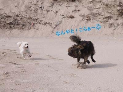 カナイくんを探せ! in 京丹後 <答え>_a0119263_17285878.jpg