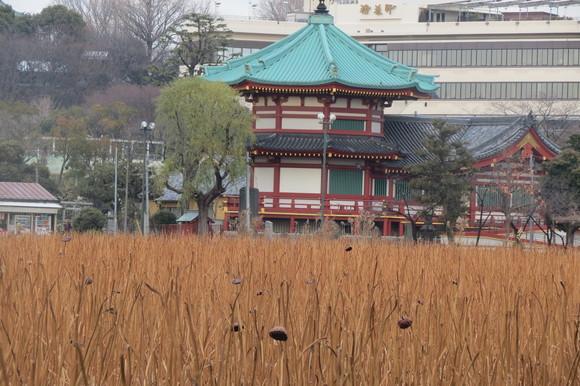 130222 春は第一コーナーを廻った東京上野、不忍池_d0288367_15463617.jpg