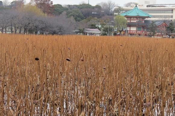 130222 春は第一コーナーを廻った東京上野、不忍池_d0288367_1546782.jpg