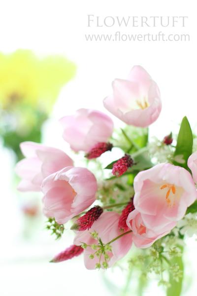 春写真♪_c0137872_13252119.jpg