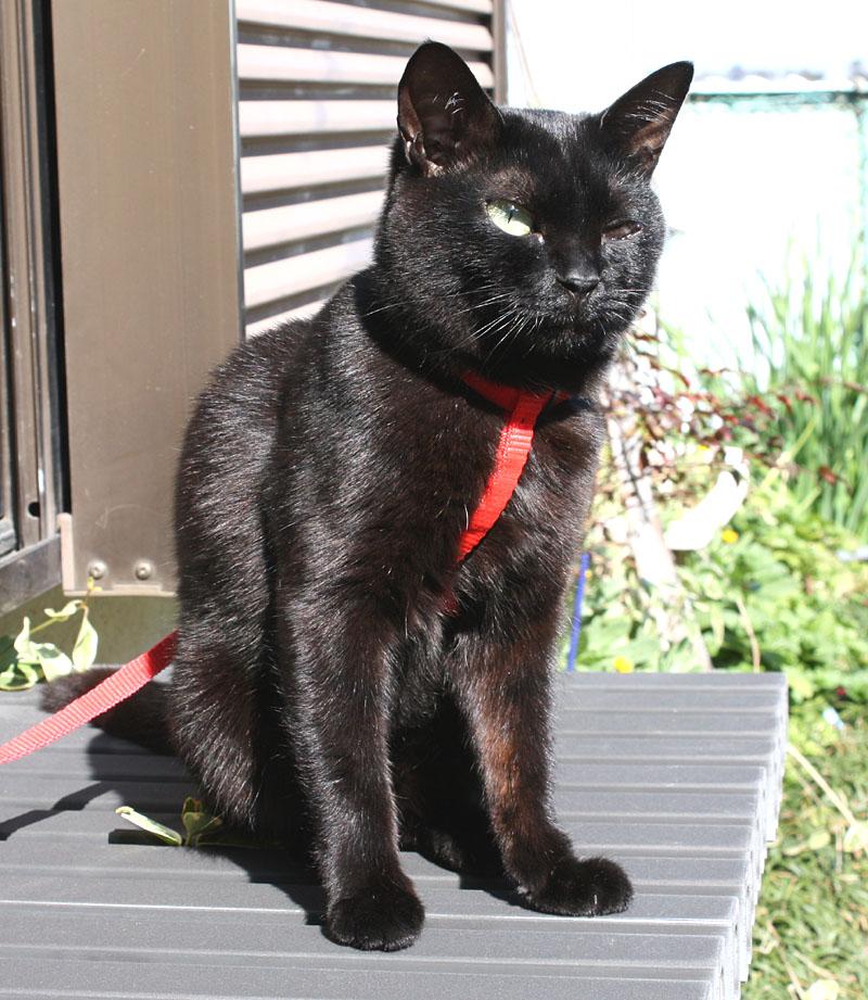 パトロールから帰ってきた愛猫・クロくん_b0114798_15394135.jpg