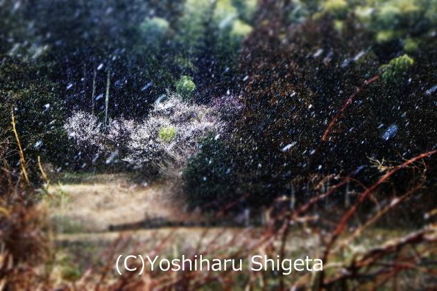 ~なごり雪~_c0152400_13593362.jpg