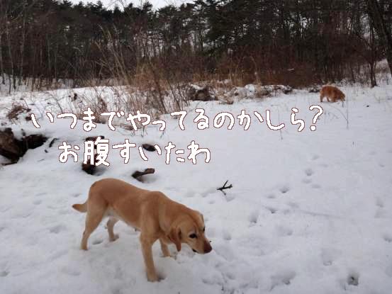 えっちゃんと風子のレスリング_f0064906_1749089.jpg
