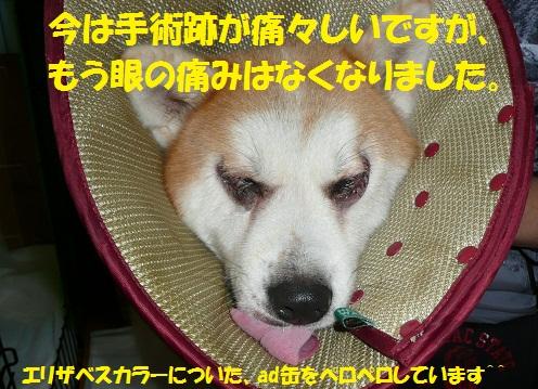 f0121712_6215156.jpg