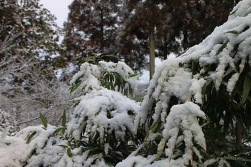 曼殊院 雪化粧_e0048413_19492993.jpg