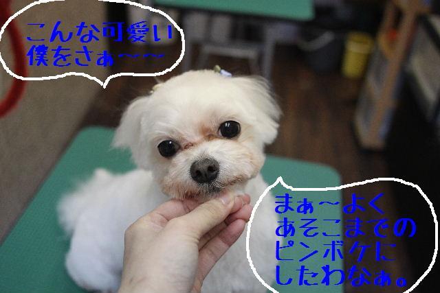 b0130018_22445389.jpg