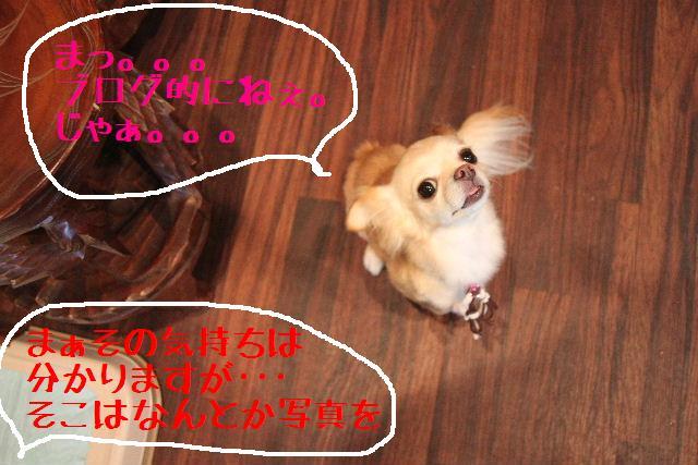 b0130018_22491978.jpg