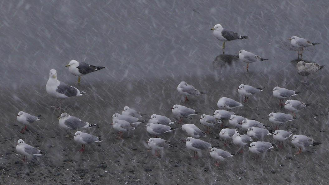 今 年 二 度 目 の 降 雪_d0039021_18472354.jpg