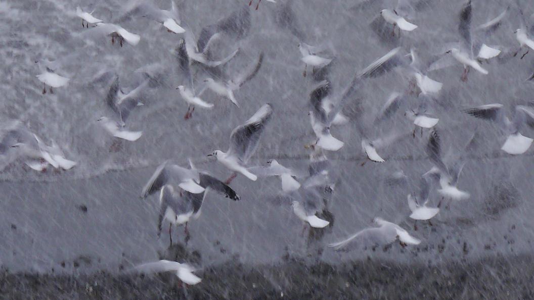 今 年 二 度 目 の 降 雪_d0039021_18481578.jpg