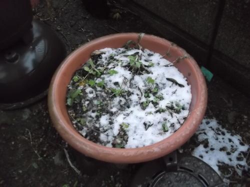 寒いです....雪が降りました。_b0137932_19172550.jpg