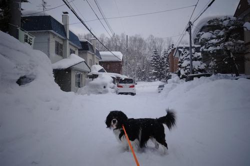 今日は3回だけ雪はね。_c0051132_21203384.jpg
