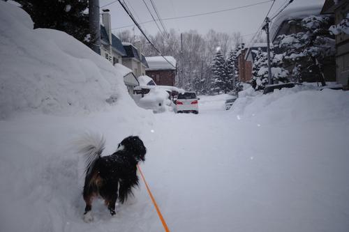 今日は3回だけ雪はね。_c0051132_21204816.jpg