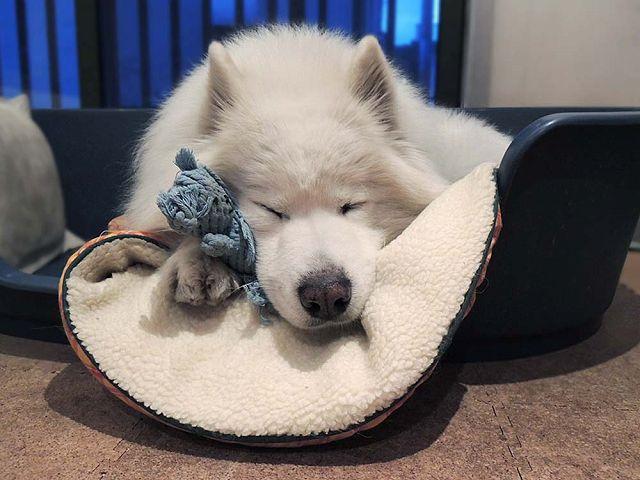 犬とくま_c0062832_6245626.jpg