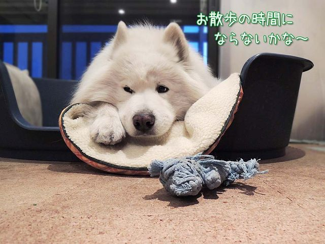 犬とくま_c0062832_6251420.jpg