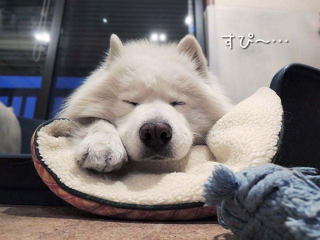 犬とくま_c0062832_6252027.jpg