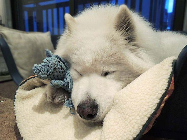 犬とくま_c0062832_625460.jpg