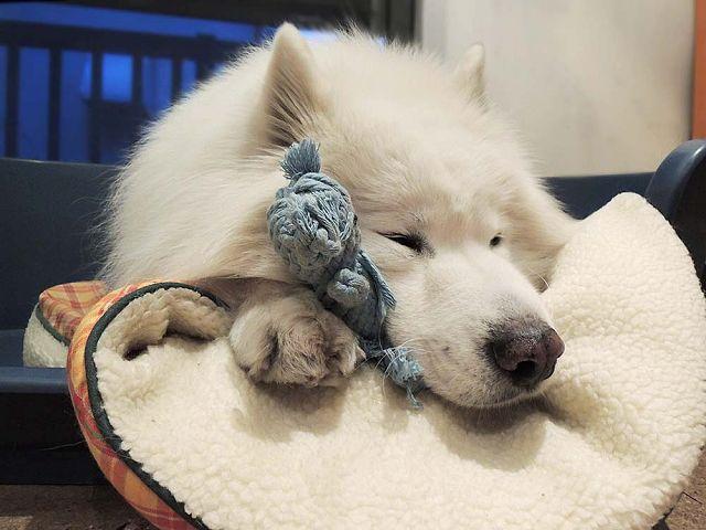 犬とくま_c0062832_625723.jpg