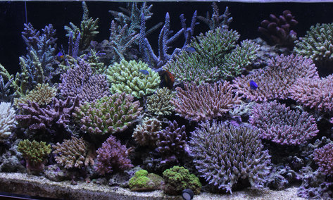 今週もスタート!海水魚&サンゴ入荷!_d0221436_23422596.jpg