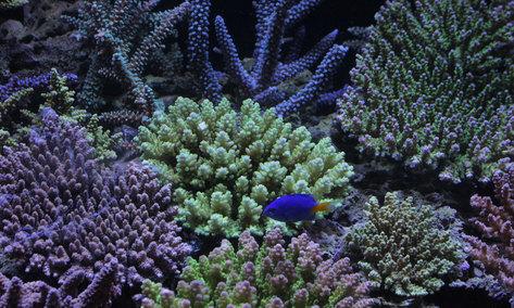 今週もスタート!海水魚&サンゴ入荷!_d0221436_23433793.jpg
