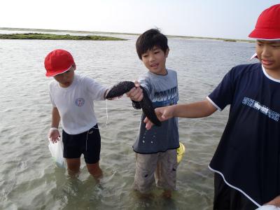 環境学習とアーサー摘み_c0180460_1622881.jpg