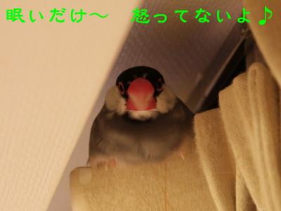 b0158061_044557.jpg