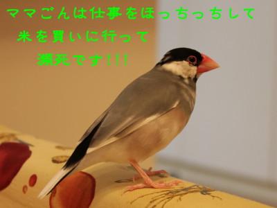b0158061_21522310.jpg