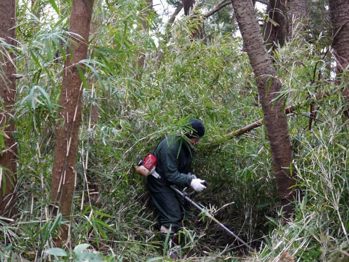 予想遙かに上回る倒木、枯れ木:2・16六国見山定例手入れ_c0014967_10242441.jpg