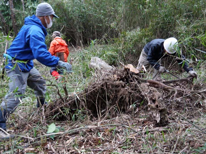 予想遙かに上回る倒木、枯れ木:2・16六国見山定例手入れ_c0014967_10245367.jpg