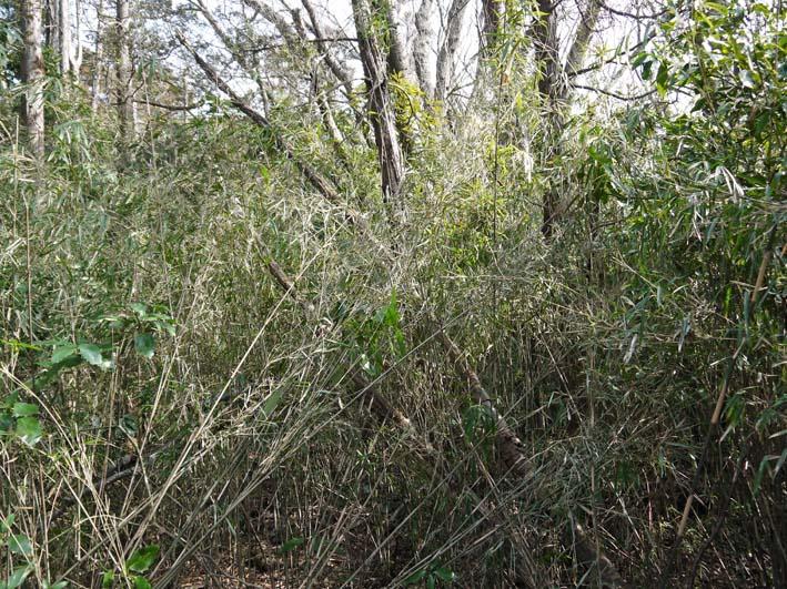 予想遙かに上回る倒木、枯れ木:2・16六国見山定例手入れ_c0014967_10324937.jpg