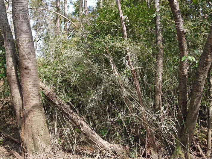 予想遙かに上回る倒木、枯れ木:2・16六国見山定例手入れ_c0014967_10332293.jpg