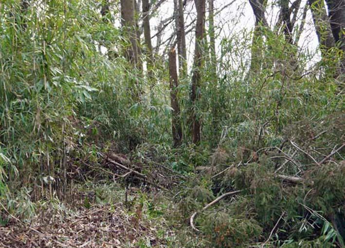 予想遙かに上回る倒木、枯れ木:2・16六国見山定例手入れ_c0014967_10335913.jpg