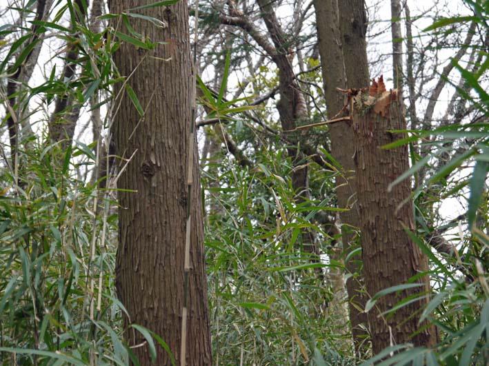 予想遙かに上回る倒木、枯れ木:2・16六国見山定例手入れ_c0014967_10341262.jpg