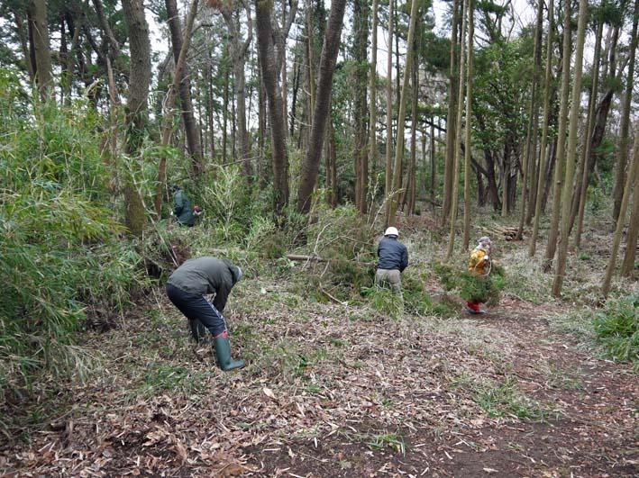 予想遙かに上回る倒木、枯れ木:2・16六国見山定例手入れ_c0014967_10344435.jpg