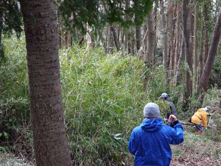 予想遙かに上回る倒木、枯れ木:2・16六国見山定例手入れ_c0014967_10351038.jpg