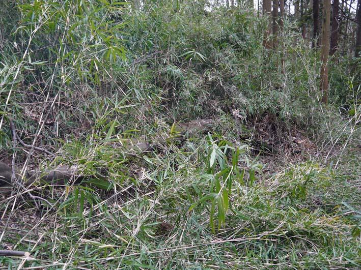 予想遙かに上回る倒木、枯れ木:2・16六国見山定例手入れ_c0014967_10383498.jpg